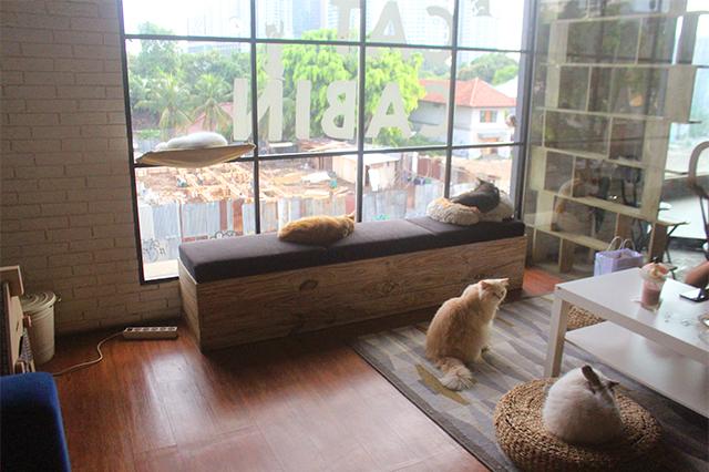 Kucing The Cat Cabin dok. duniamasak
