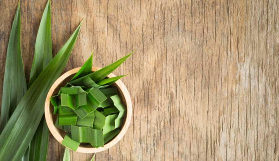 Perbedaan daun suji dan daun pandan via freepik ala tim duniamasak.com