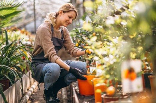 tanaman dapur via freepik ala tim duniamasak.com
