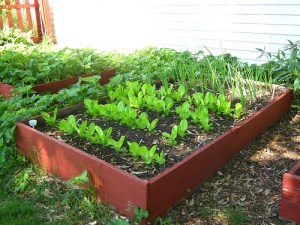 Broadfork_for_Homestead_rasied_Bed_garden