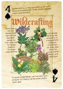 wildcrafting-permaculture-card
