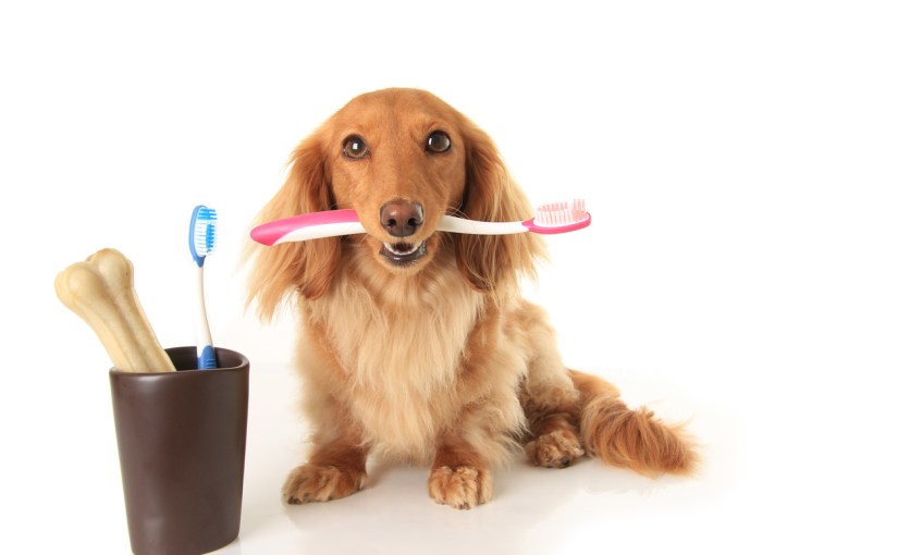 Top 5 Dental Offers for Clients During Pet Dental Month