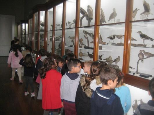 Visita de Estudo ao Museu Municipal do Funchal – Aquário