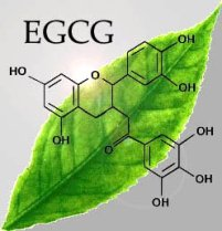 green tea extract EGCg