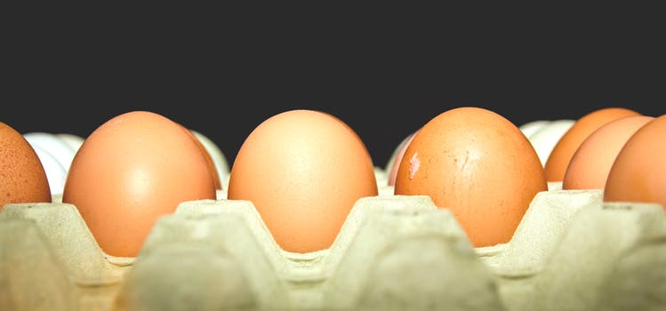 free range eggs - health foods