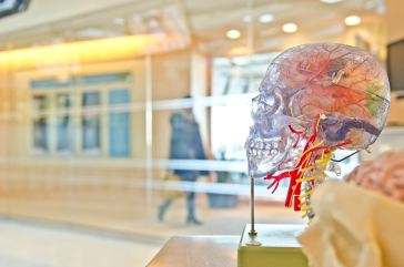 display of inside a brain
