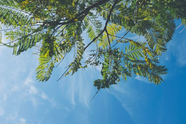 sunny sky looking up at trees