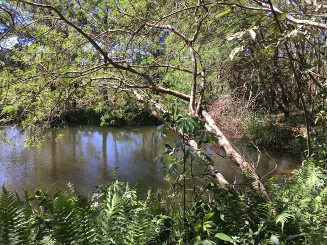 Foto mostra uma nascentes cercada de árvores nativas