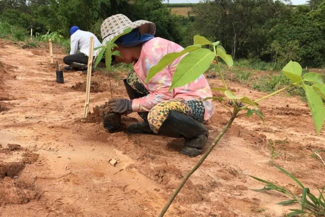 Foto mostra duas pessoas plantando árvores nativas