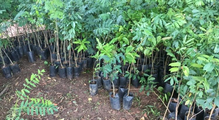 como plantar uma árvore