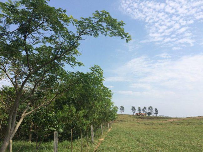 Fotos mostra área de reflorestamento e a escola Ecooar de educação ambiental ao fundo
