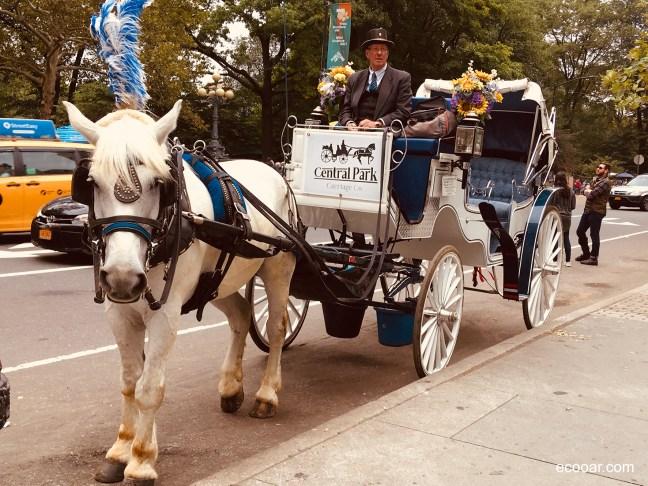 Foto mostra charrete que fica ao lado do Central Park