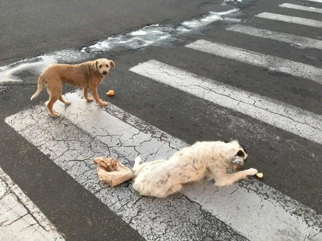 Foto mostra cães abandonados se alimentando