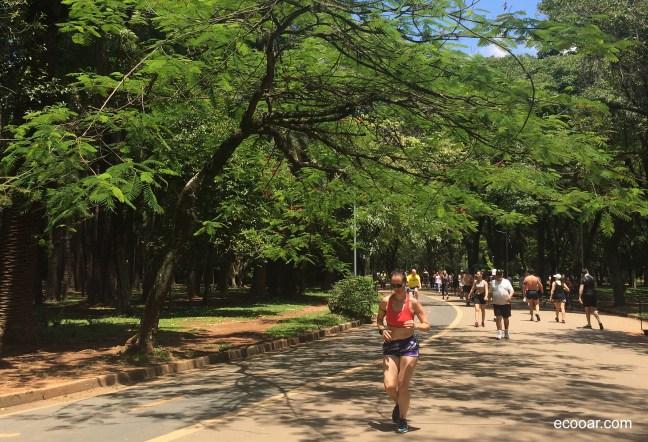 Foto mostra pessoas caminhando no parque Ibirapuera, local que abriga fauna e flora de São Paulo