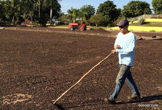 Foto mostra trabalhador espalhando café em terreiro, com trator e árvores ao fundo