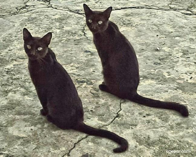 Foto mostra dois gatos sentados, um ao lado do outro