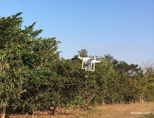 Foto mostra drone em área de reflorestamento Ecooar