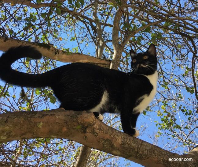Foto mostra gato em cima de uma árvore