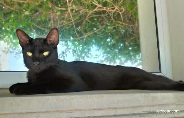 Foto mostra gato deitado próximo de uma janela