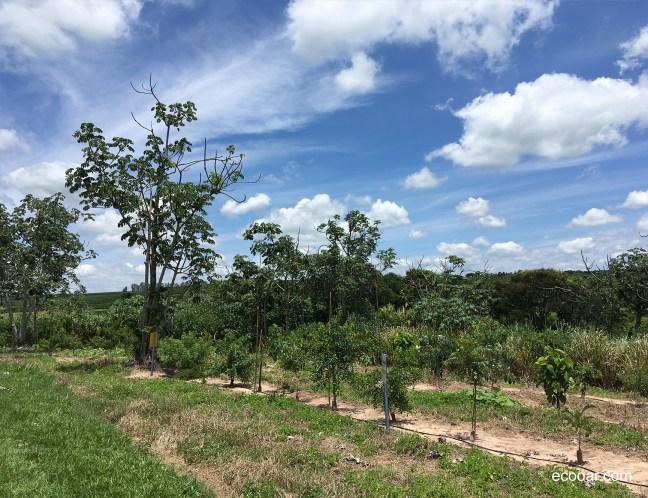 Foto mostra árvores plantadas para compensar kart de Fernando Lopes