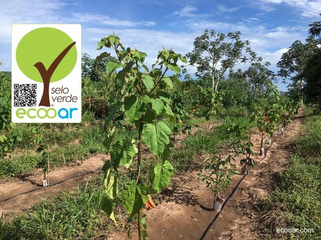 Foto mostra árvores nativas plantadas, com sistema de irrigação e arte do Selo Verde Ecooar com QR Code