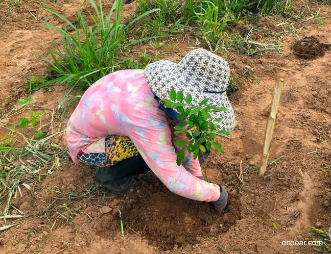 Foto mostra mulher agachada plantando árvore em área de reflorestamento Ecooar