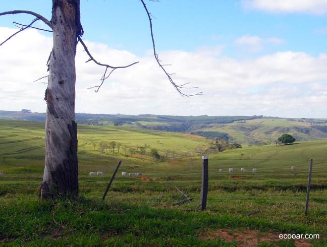 Foto mostra um vale e uma área de reflorestamento Ecooar cercada