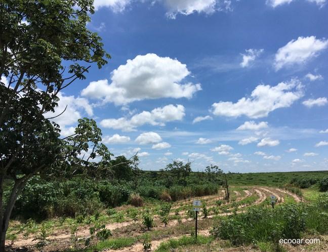 A imagem pode conter: mudas e árvores plantadas para cliente Ecooar lavanderia