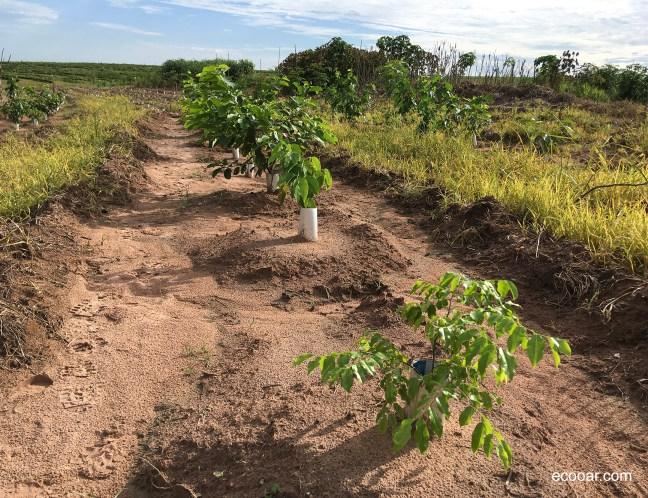 Foto mostra árvores nativas plantadas em área de preservação permanente com Selo Verde
