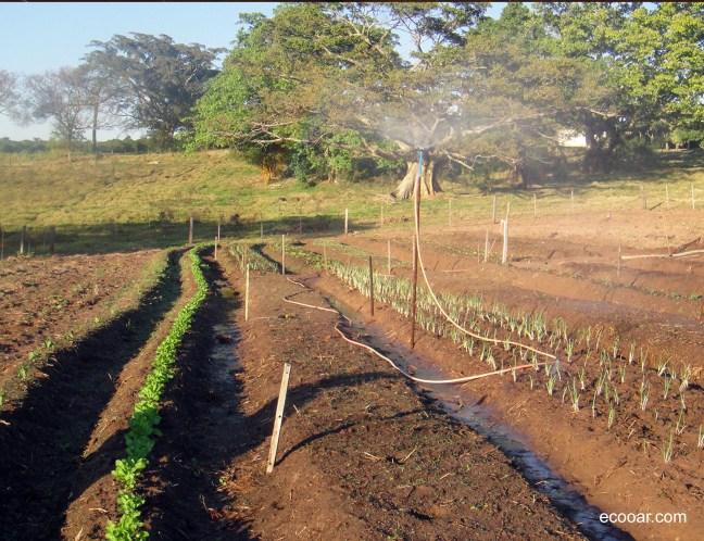 Foto mostra horta em casa com amplo quintal