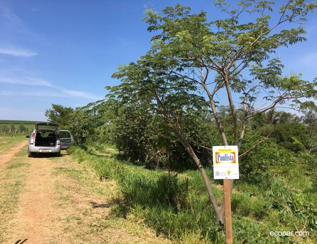 Foto mostra área de reflorestamento com placa da empresa Massas Paulista