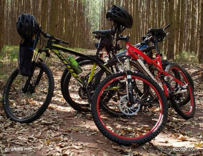 Foto mostra duas bicicletas no meio de uma mata de eucaliptos