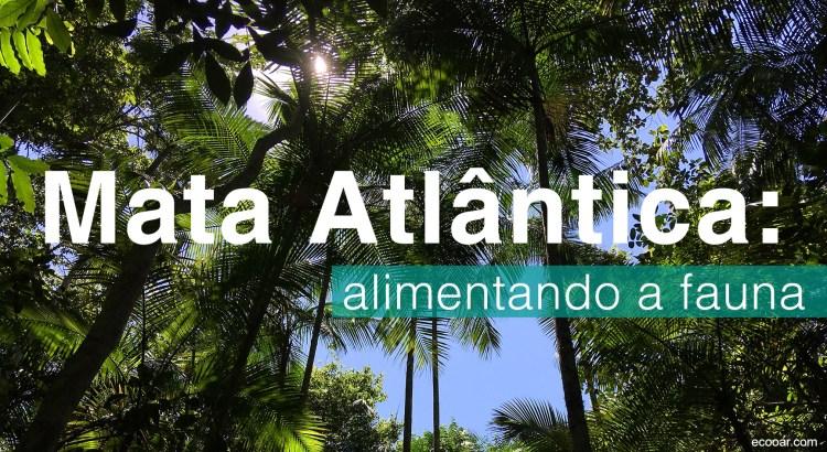 Foto mostra árvores dentro da Mata Atlântica