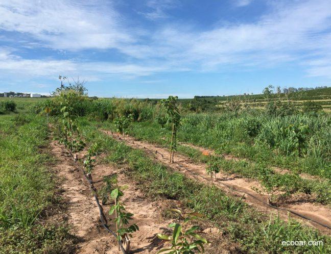 Foto mostra área de reflorestamento