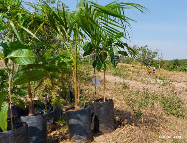 Foto mostra área de plantio de árvores da série A Sustentável Leveza do Ser