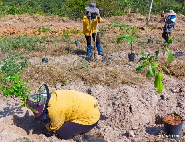 Foto mostra pessoas plantando árvores