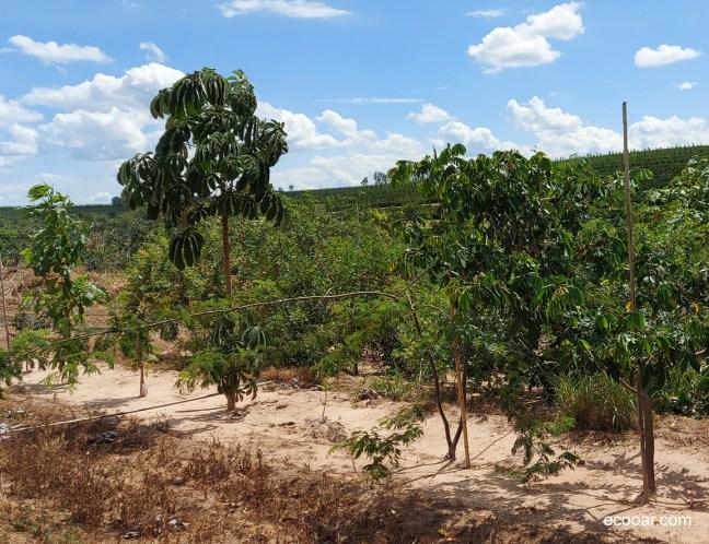 Foto mostra área de reflorestamento da Greenga Design