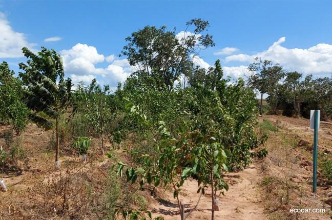 Foto mostra área de reflorestamento do Café Família Bosquê