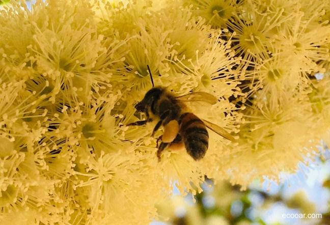 Foto mostra abelha em flor