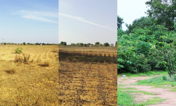 This field went from dirt to dense forest in just two years. Courtesy of Afforestt