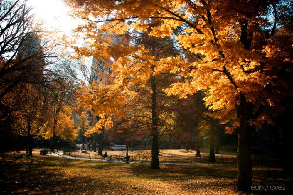 Shot of the Day-Autumn is Here - image  on http://blog.edinchavez.com