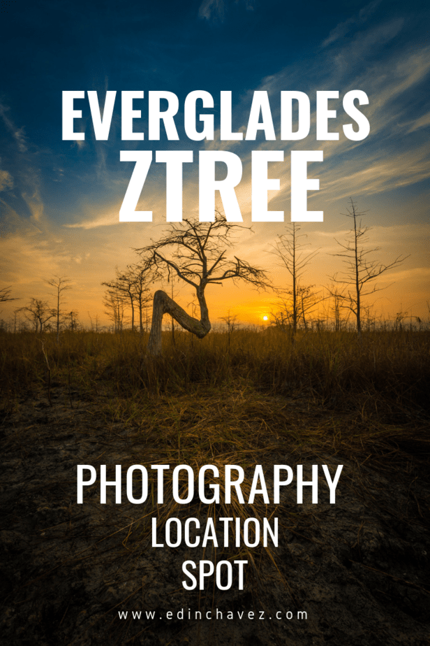 Z tree in the everglades location