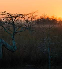 Capture the Sunrise at the Everglades - image  on http://blog.edinchavez.com
