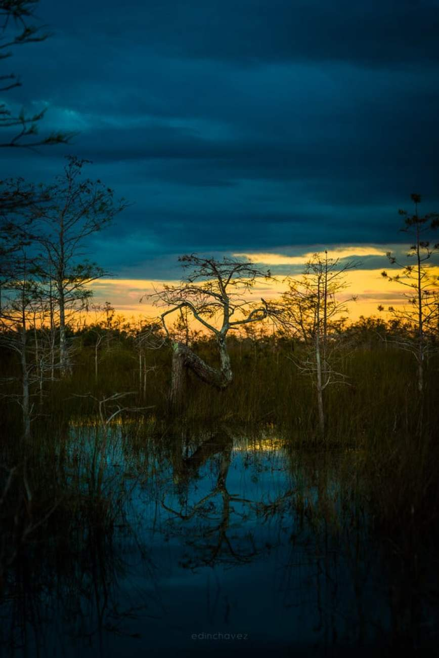 Where is the z tree in the everglades national park