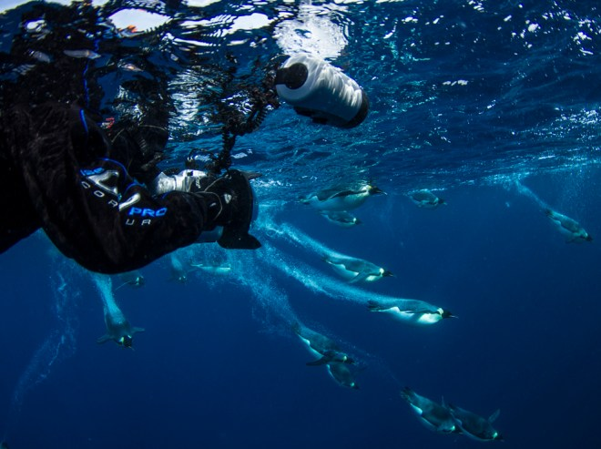 Nat Geo photographers also swim at the surface, with their tanks full of air. Photograph by Paul Nicklen, National Geographic