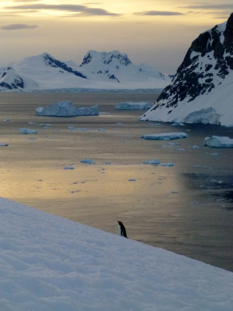 Penguin and Mountains-crop