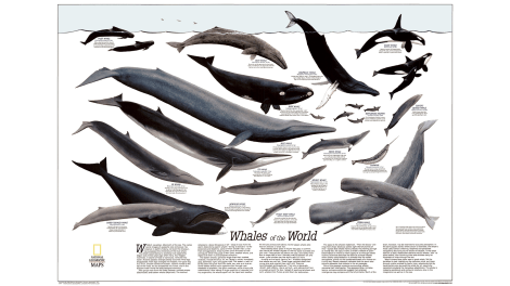 Take a look at the many faces of Leviathan. Map by National Geographic