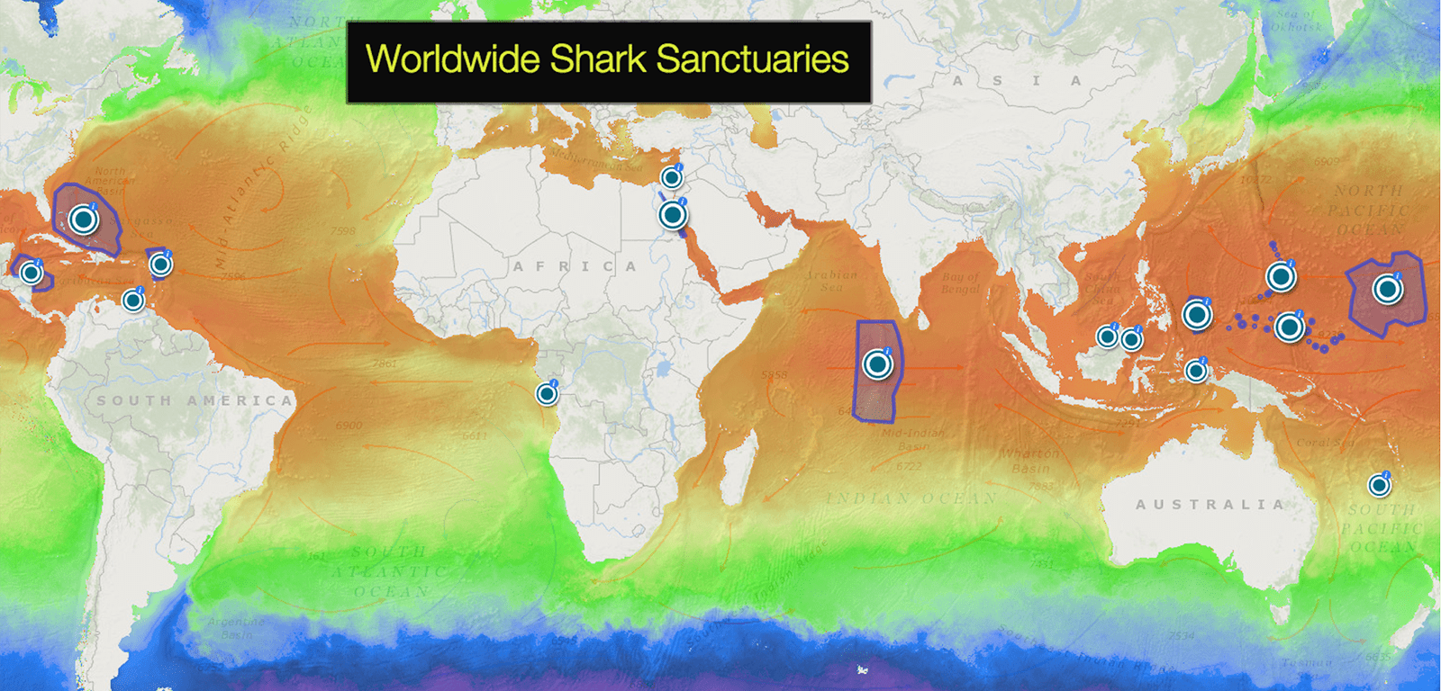Saving Sharks with Sanctuaries