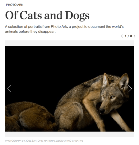 photoark-cats-dogs