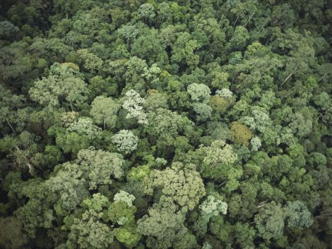 This breathtaking forest is not undiscovered—it's in Borneo.Photograph by James P. Blair, National Geographic
